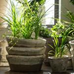 Pflanzen - Dampfreiniger