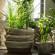 Pflanzen mit Dampfreiniger pflegen
